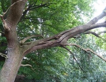 Biomécanique - fissure arbre