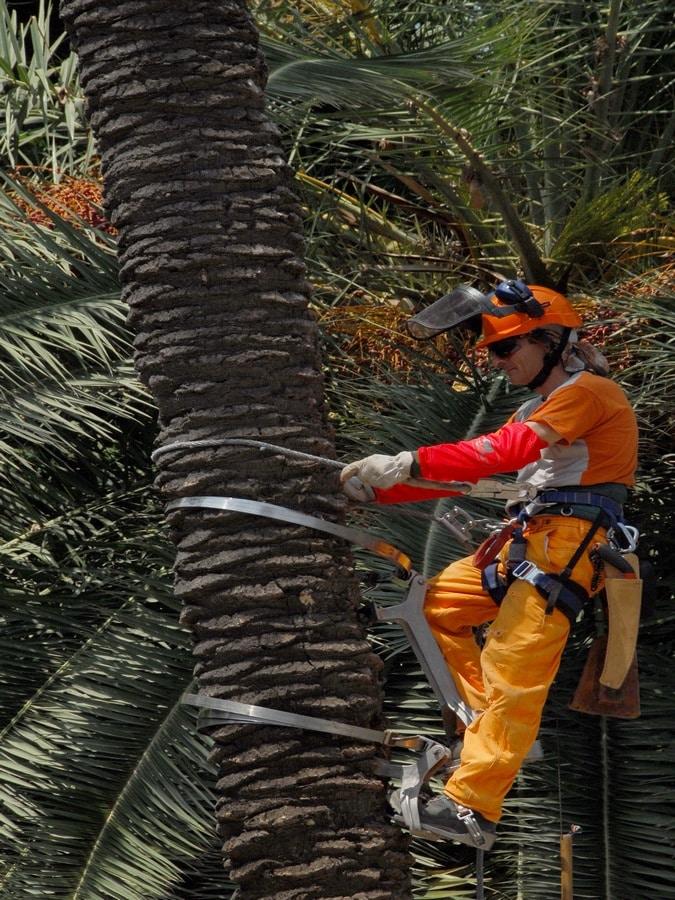 Formation palmier - entretien