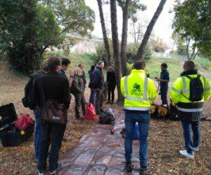 Groupe de formation sur le confortement des arbres par le haubanage