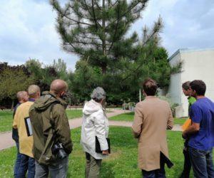 Architecture et développement de l'arbre Avec Jeanne MILLET