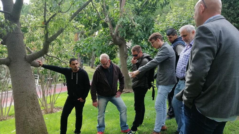 Photo formation détection des arbres à risques