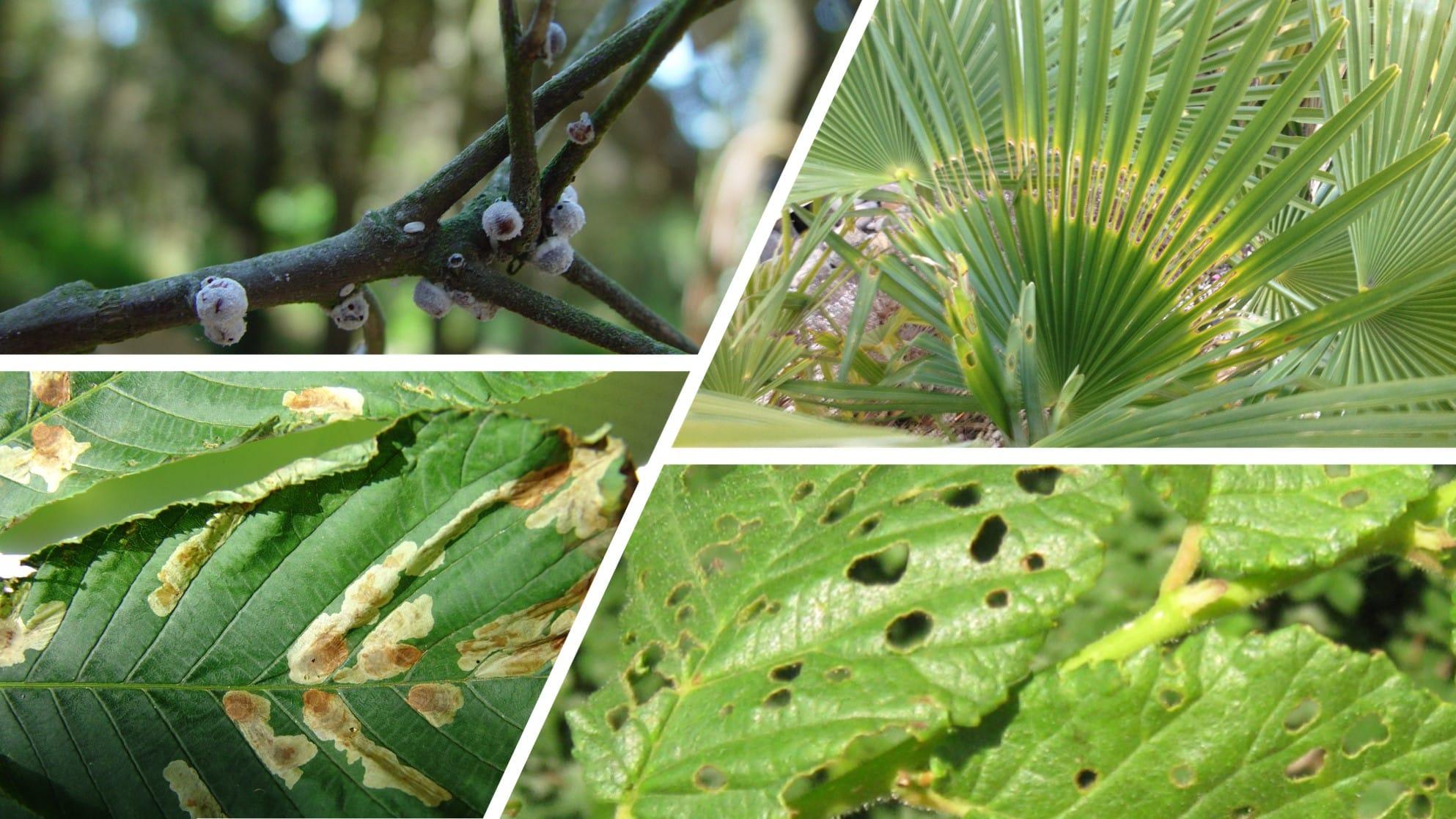 Formation Santé des arbres