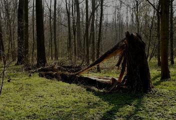 Détection des arbres à risques