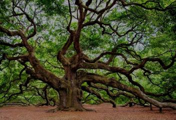 Architecture arbre
