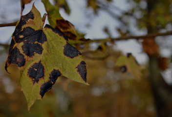 Pathologie arbre