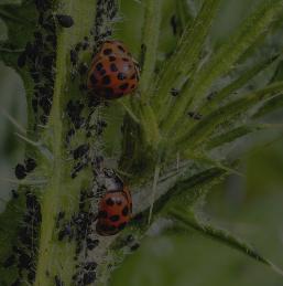 Focus sur la lutte biologique