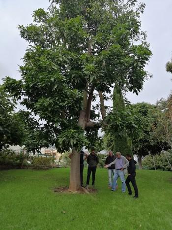 Formation détection des arbres à risques observation du collet